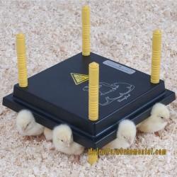 Placa térmica confort para pollitos