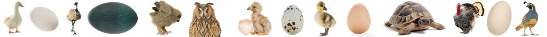 Las mejores ofertas del mercado de la incubadora y la incubación